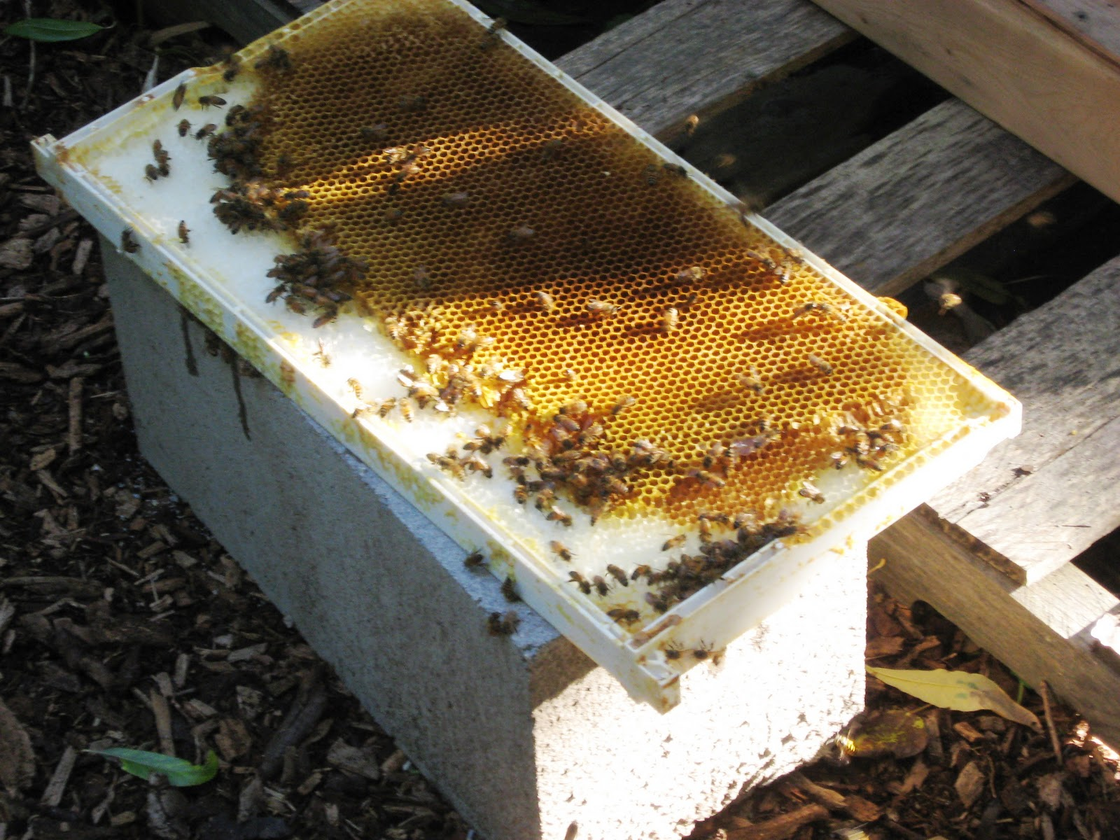 How to make a moisture quilt for a langstroth hive honey - I Ve Finished My Prototype Moisture Quilt Insulated Hive Cover Waiting For My Patent In My Next Post I Will Show You How I Made It
