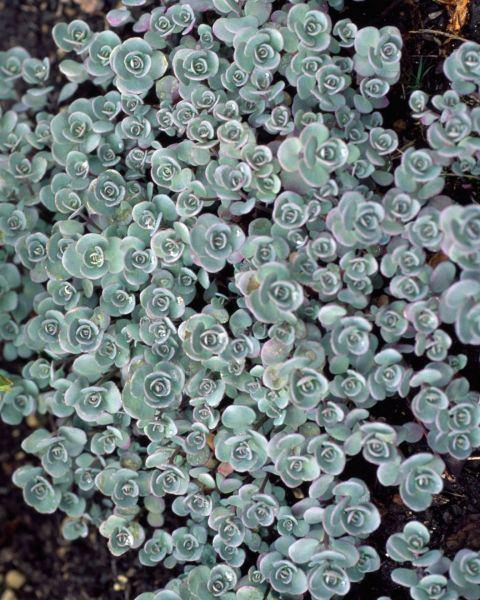 9 bellissime piante che resistono anche al grande caldo for Piante da terrazzo resistenti al sole e al freddo