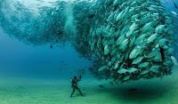 Hayvanların Sürü Halinde Çekilen Fotoğrafları