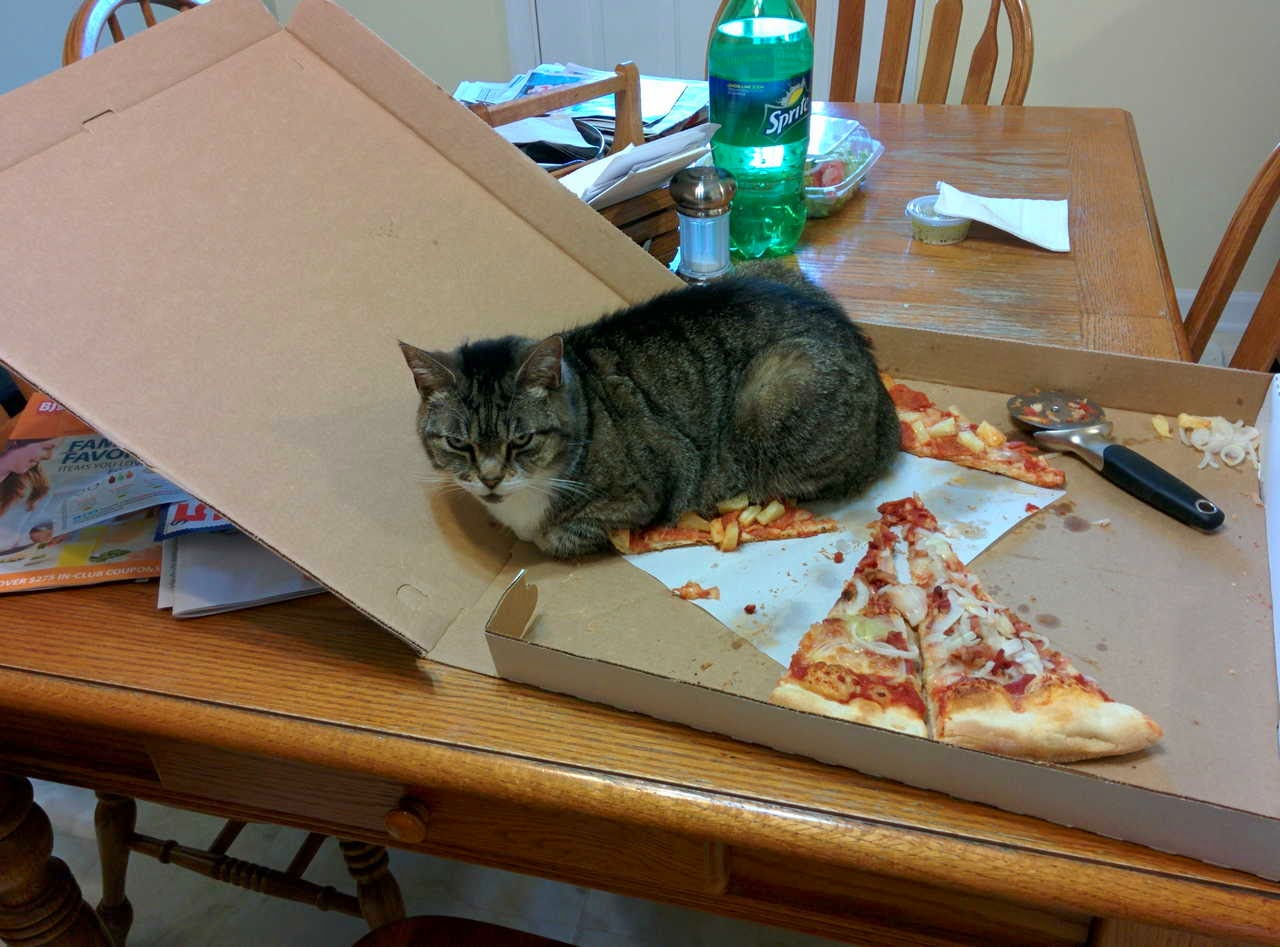 Funny cats - part 156, best funny cat pictures, cat photo, cute cats