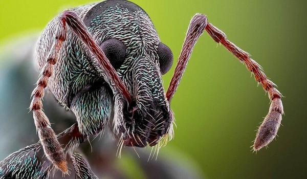 Un vistazo de cerca a los insectos de jardin