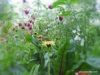 Trädgårdsland,