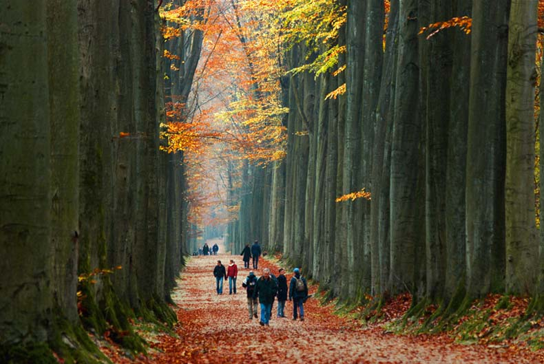 Imágen del dia: Caminando entre Gigantes