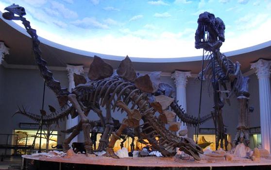 Fosil Binatang Purba