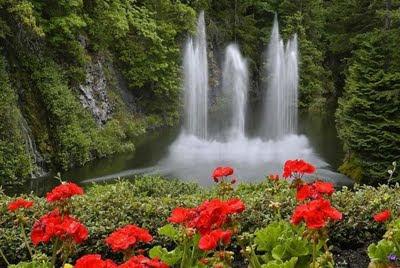 Fotos E Imagens De Flores Do Campo - Mulher Andar Em Campo De Flores fotos e imagens