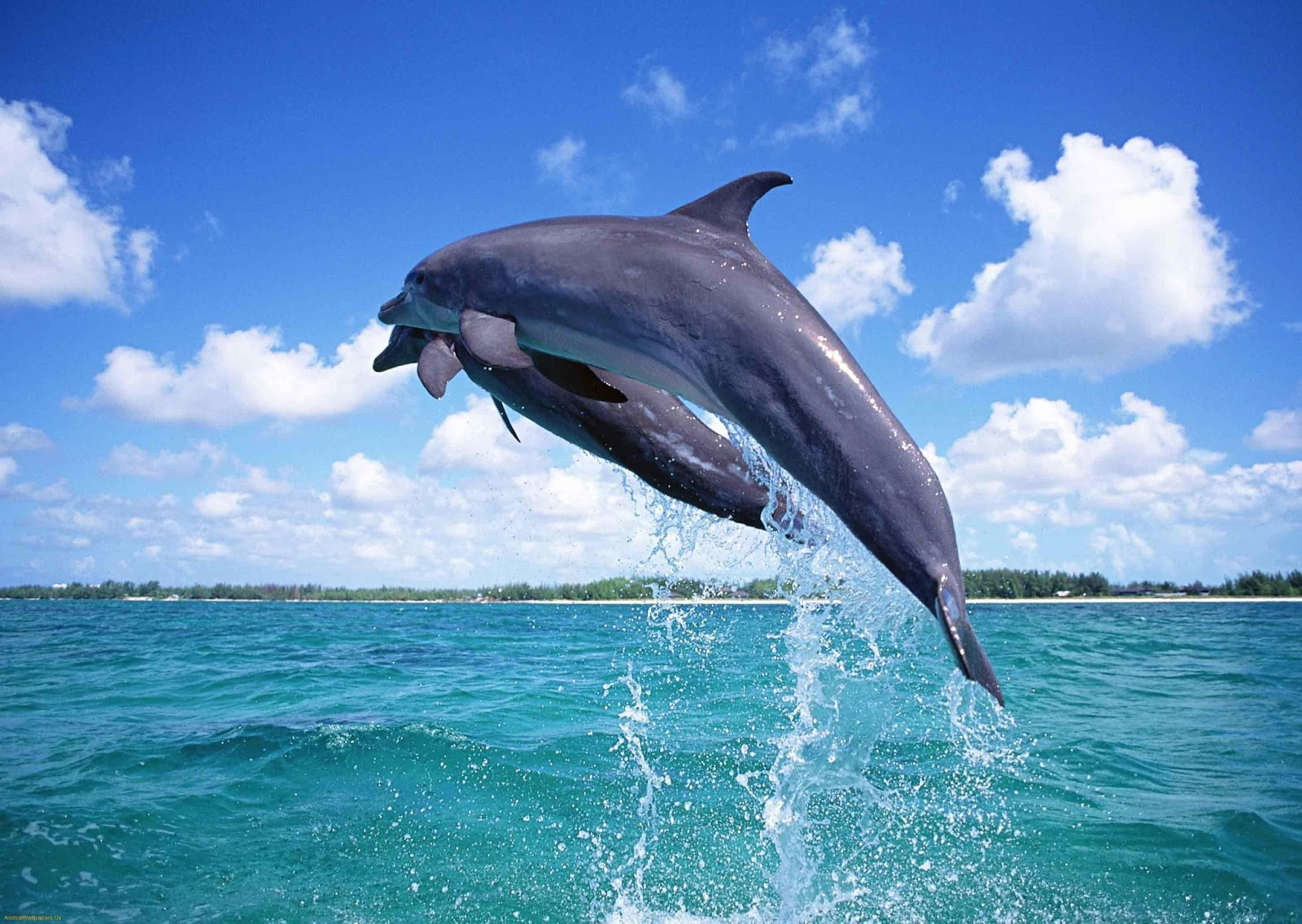 http://1.bp.blogspot.com/-y3UqqxAtuXE/UU0ZEoHCw8I/AAAAAAAABXM/7BfKGO1meJk/s1600/cute-dolphin-fish-wallpapers-1494-hd-wallpapers.jpg