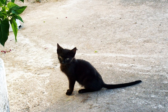 Cat from Aljustrel, Portugal