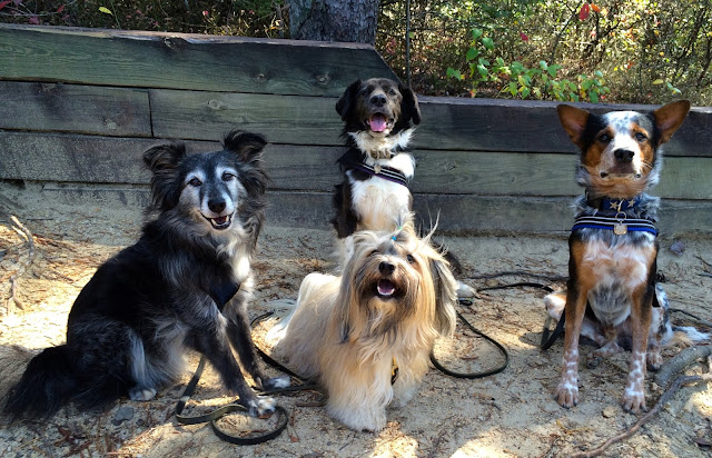 hiking with dogs at Tallulah Gorge with Rocco Havanese Johann Gracie Rach