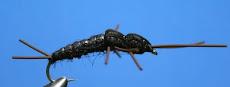 Pteronarcys Stonefly