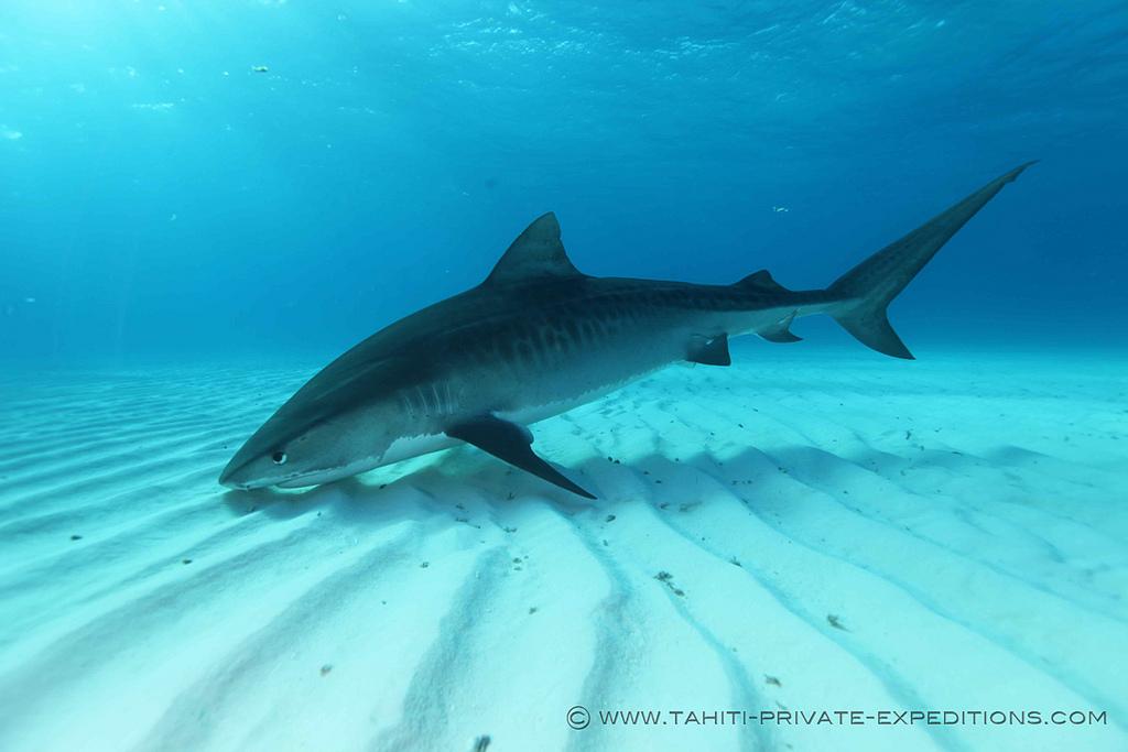Shark Defenders: October 2011