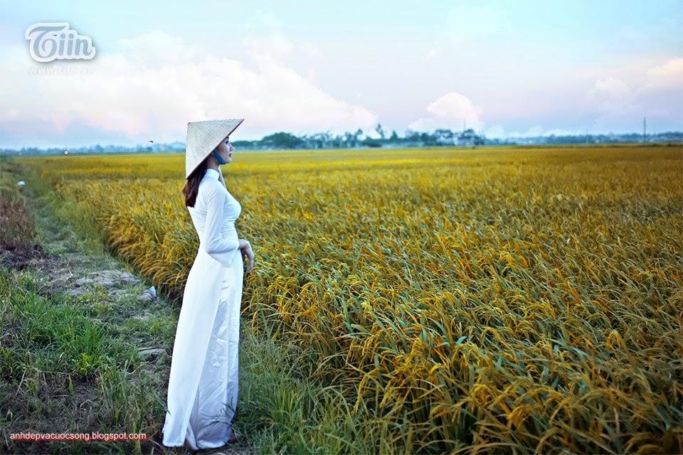 Ảnh con người: Áo dài dao chơi ngoài đồng lúa vàng 13