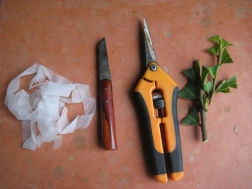 Kĩ thuật ghép cây hoa mai