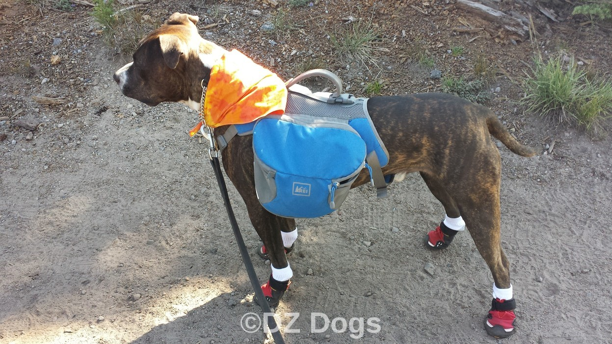 DZ's Adventures: Groundbird Gear ~ Dog Backpack