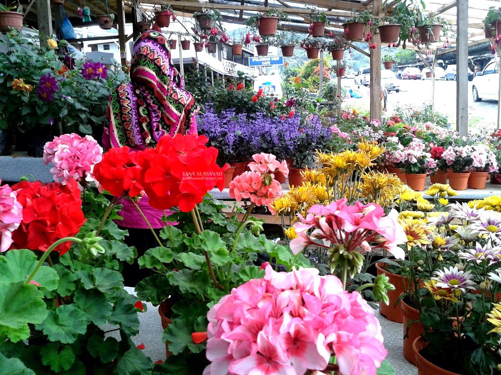 Beli Bunga dan Sayur di Kundasang Sabah
