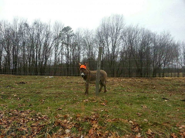 Funny animals of the week - 27 December 2013 (40 pics), donkey wears orange hat