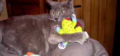 Δείτε πως μετέτρεψε το σπίτι του σε παιδική χαρά για γάτες