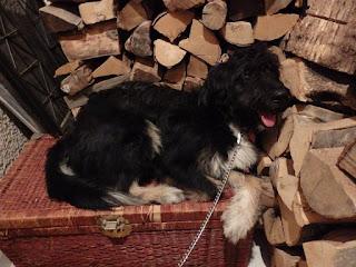 Βρέθηκε κούκλος σκυλάκος στο Παλαιό Φάληρο