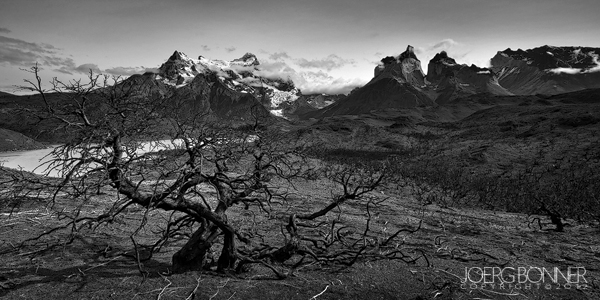 Burnt trees after the fire in Torres del Paine by Joerg Bonner