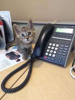 cat near phone