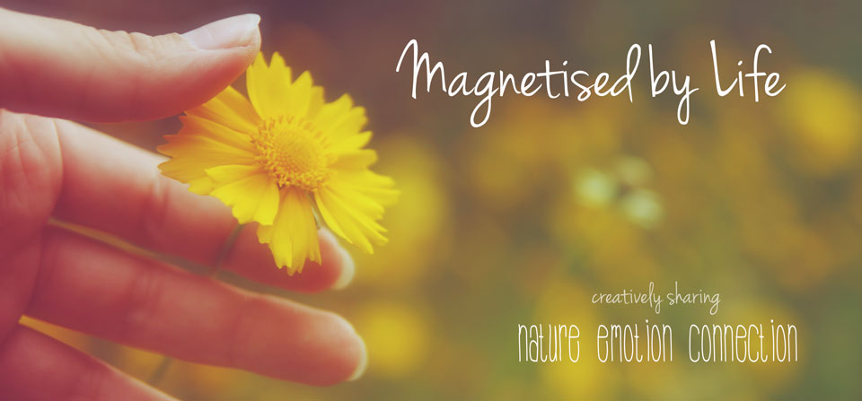magnetised by life