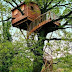 Photo Tree houses