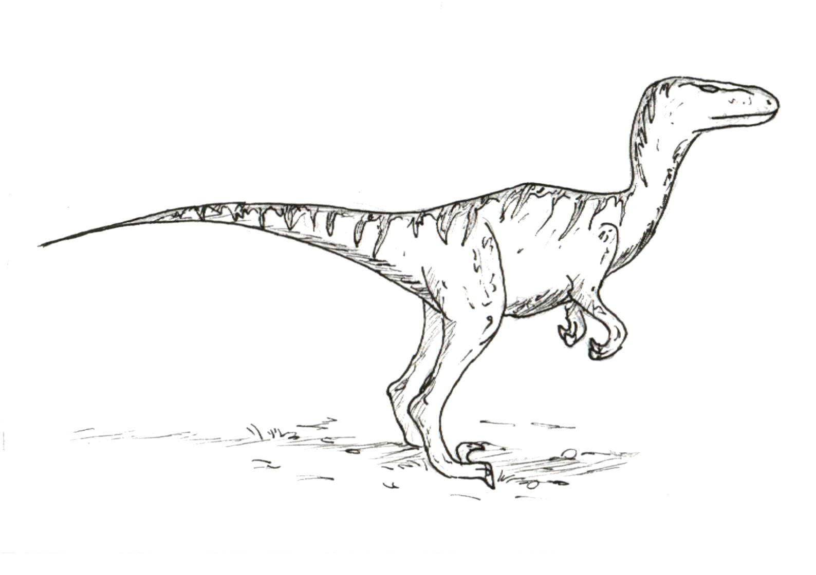 dinosaure; bordeaux; cap sciences; tyrannosaure