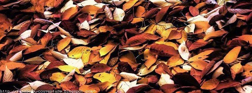 Image couverture facebook feuillages d'automne