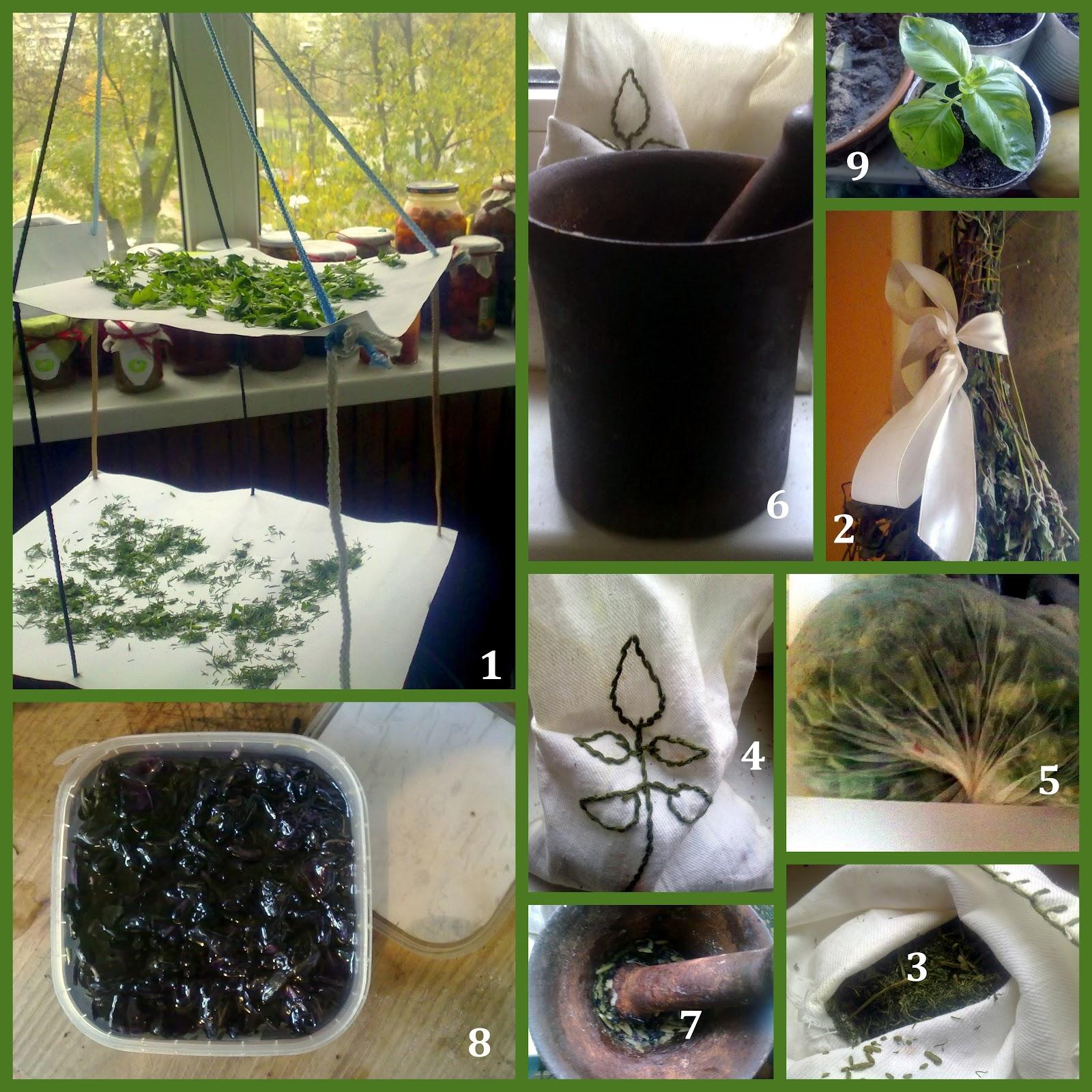 Заморозка зелени: 20 рецептов заготовок 45