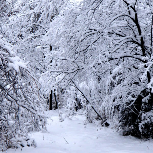 Woodland Snow Path - Snow Photograph