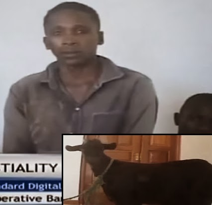 kenyan man jailed sex with goat