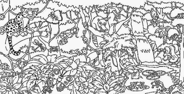 Rainforest Coloring Pictures | Free Coloring Pictures