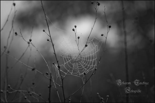 Ein Radspinnennetz