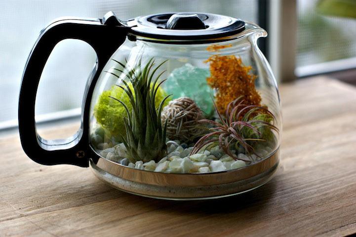 Creativo proyecto de bricolaje convierte cafetera en un adorable terrario
