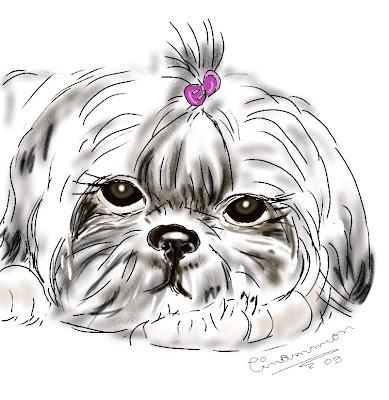 How to Draw a Shih Tzu Dog