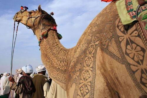 arte-camello-1.jpg