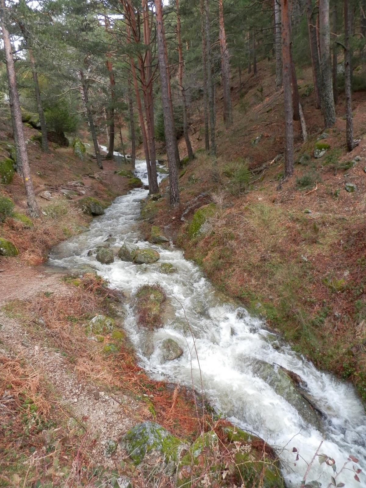 paisaje-de-un-río-entre-pinos-en-la-Sierra-de-Guadarrama