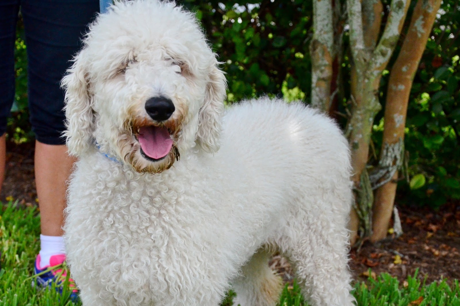 Displaying 19> Images For - Curly Haired Dogs... Y Dog Names