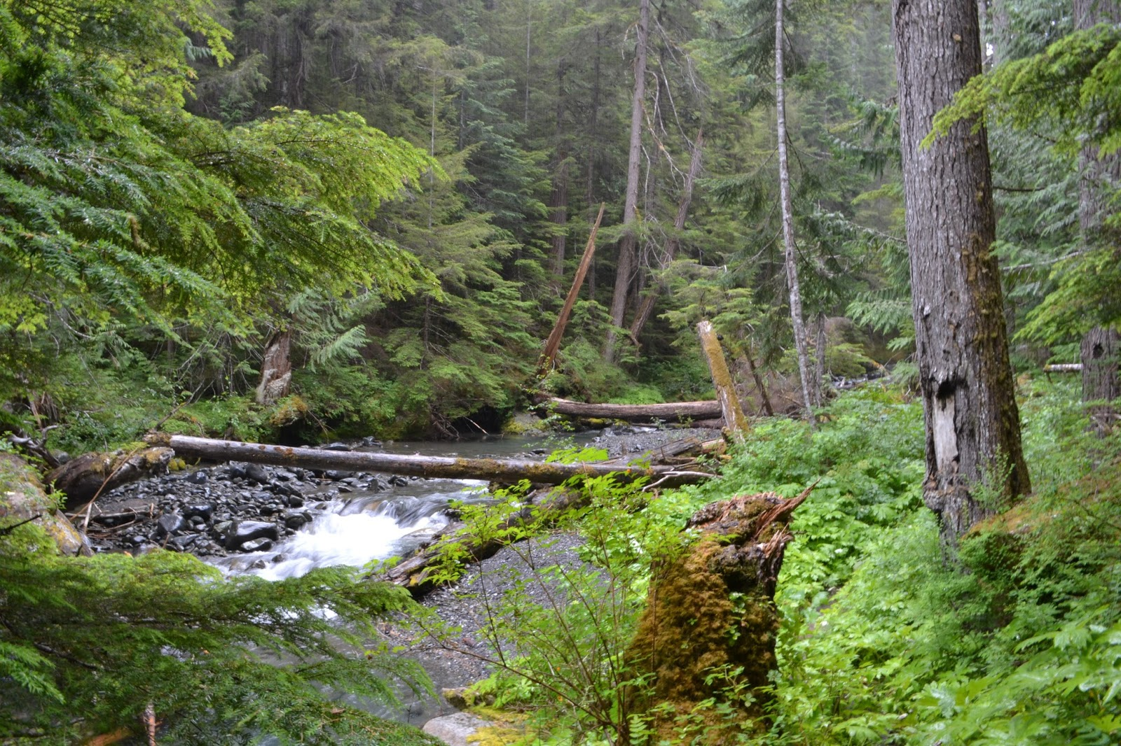 ENVIR 495C 2015 Landscape Change And The Future Of Wilderness