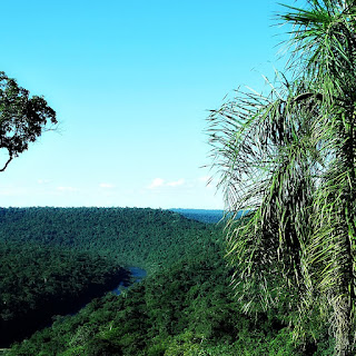 Rio Uruguai entre parte de árvore e palmeira. Moconá, Misiones, Argentina.
