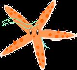 starfish pattern: