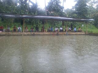 umpan ikan mas harian musim hujan