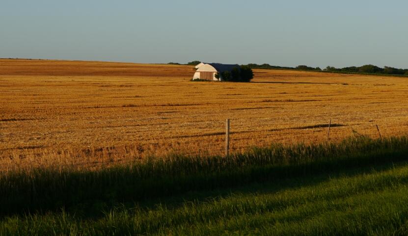 Wheat field at twilight