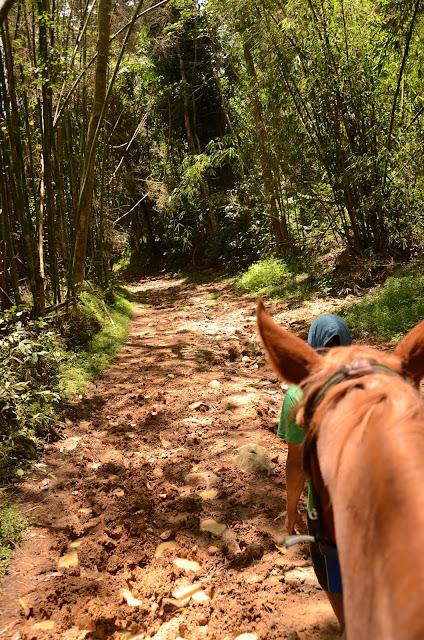 muddy trek seen from horseback