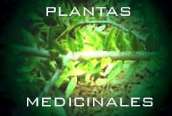 PLANTAS