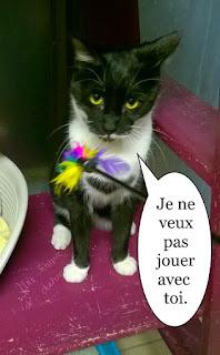 Chat noir et blanc avec le plumeau.