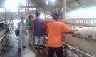 Kunjungan dan Pengenalan Obat ke Peternakan Domba Potong tgl 17 Januari 2014