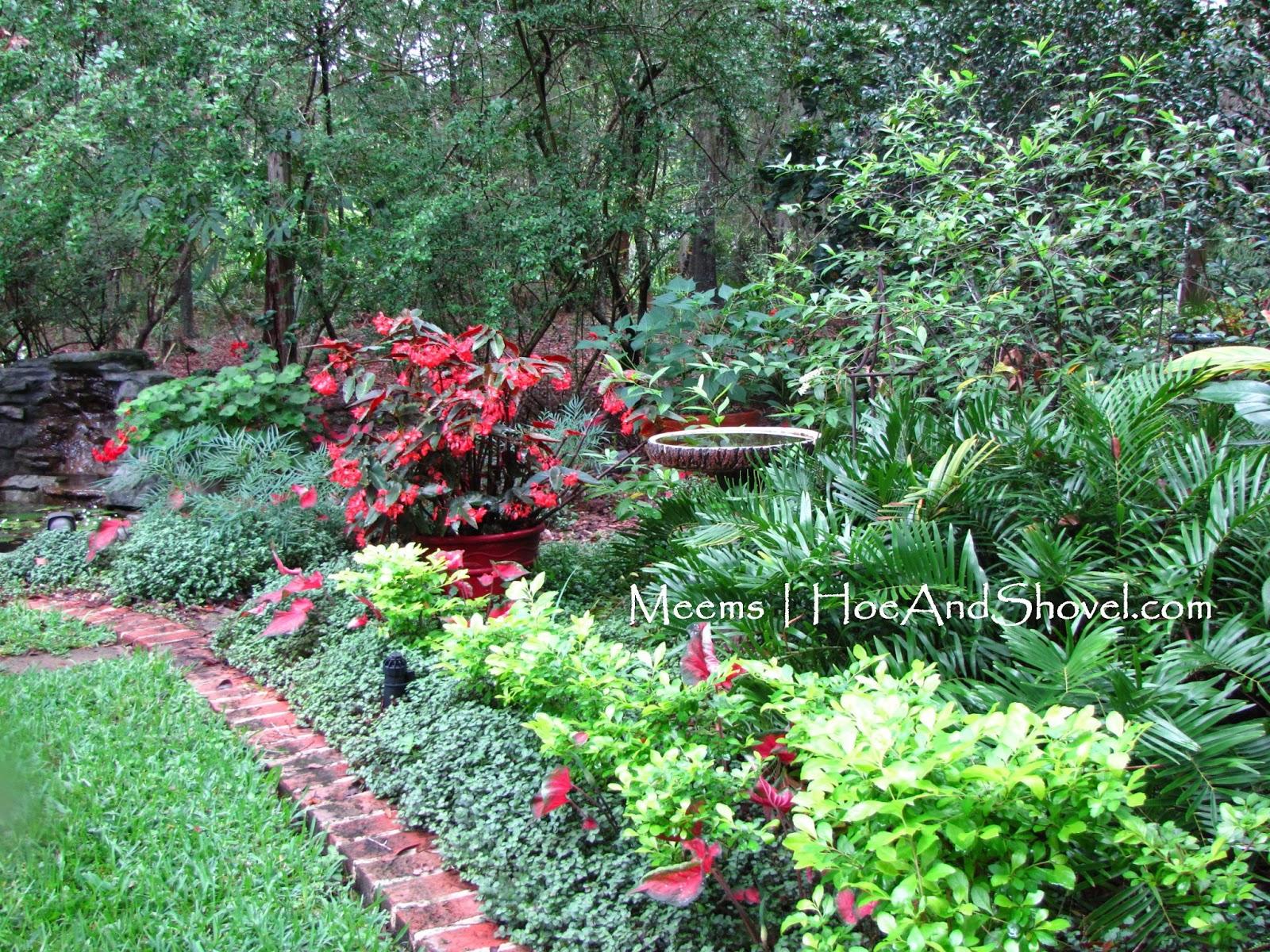 Hoe and shovel a florida moss garden - Container gardening in florida ...