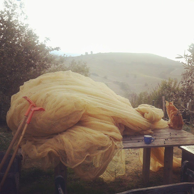 Olive picking nets and tools with #febothecat on our table in the olive grove