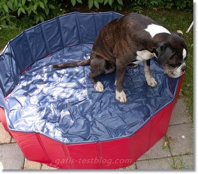 Doggy Pool ohne Wasser