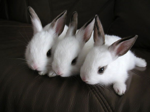 20 Cute bunny pictures | Amazing Creatures